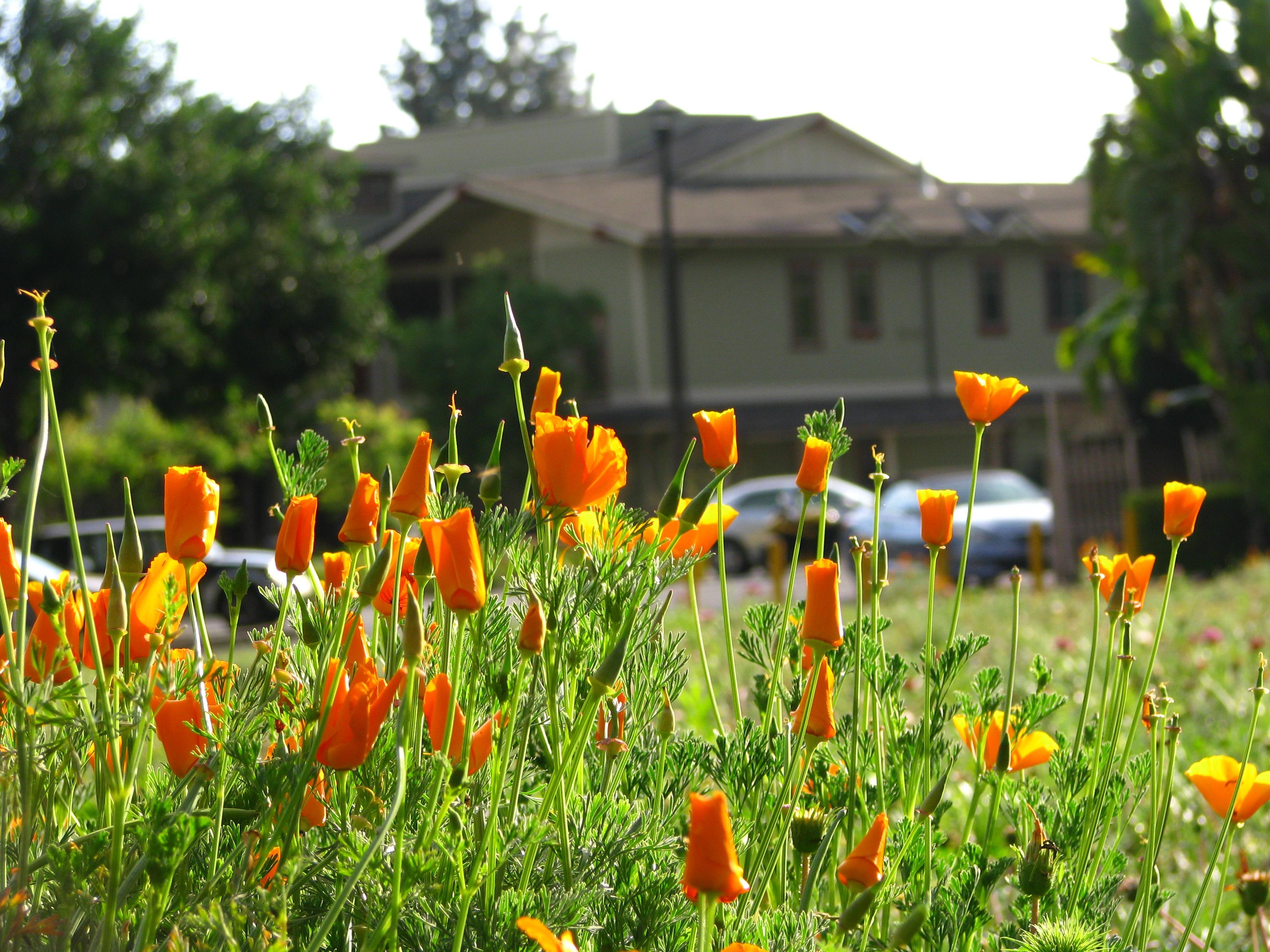 Santa Teresita Flowers