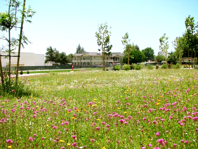 Santa Teresita Field